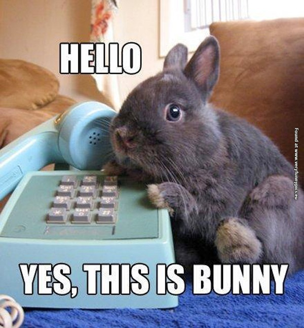 When the bunny answers