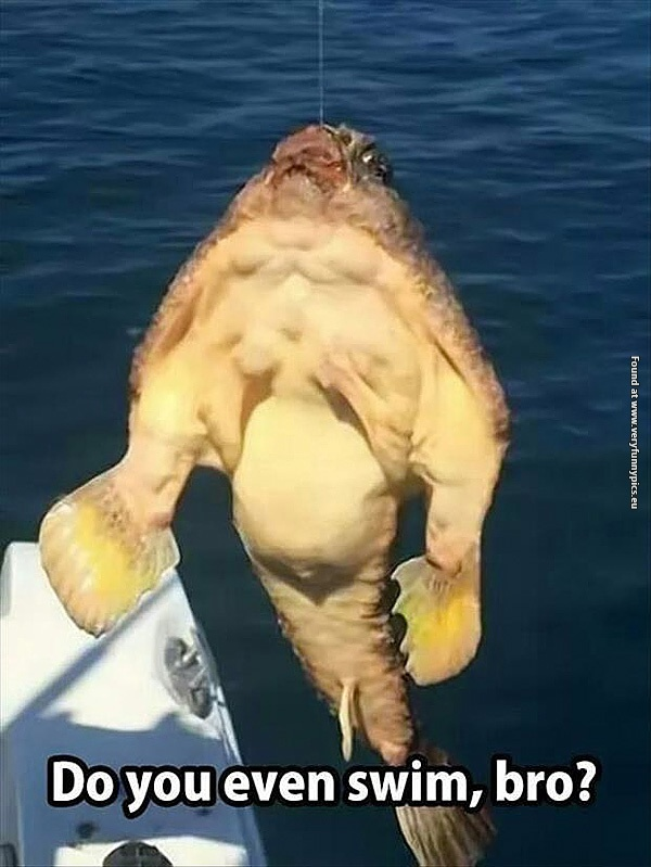 Anabolic fish questions your training