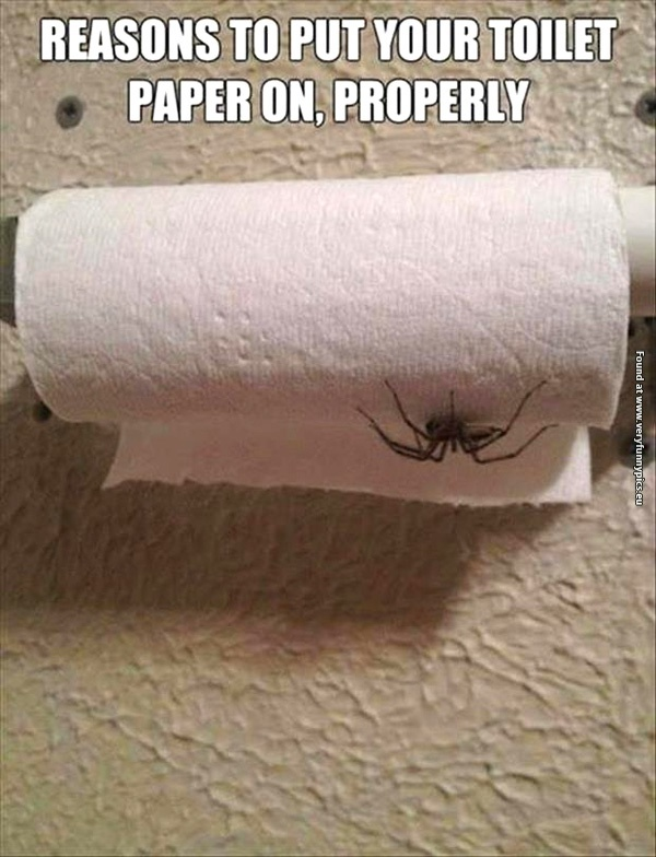Spider On Toilet Paper Roll Amp Sp34 Roccommunity