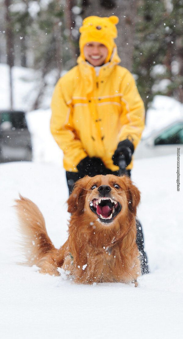 This dog really loves snow