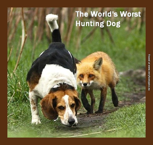 Probably the worst hunting dog in the world
