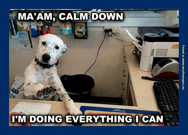 Office dog sucks at his job