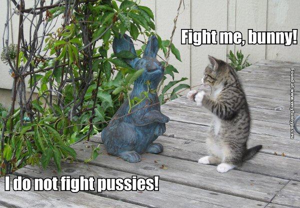 Brave kitten wants a fight
