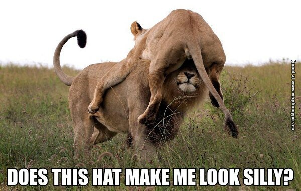 Any lion looks great in a hat like that