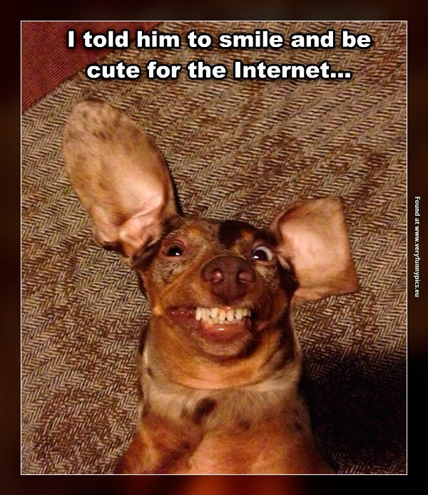 The cutest dog on the internet
