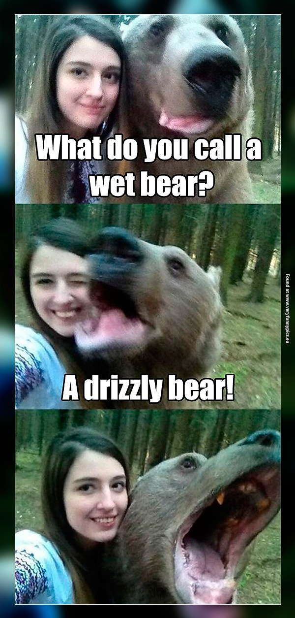 A Very Funny Bear Very Funny Pics
