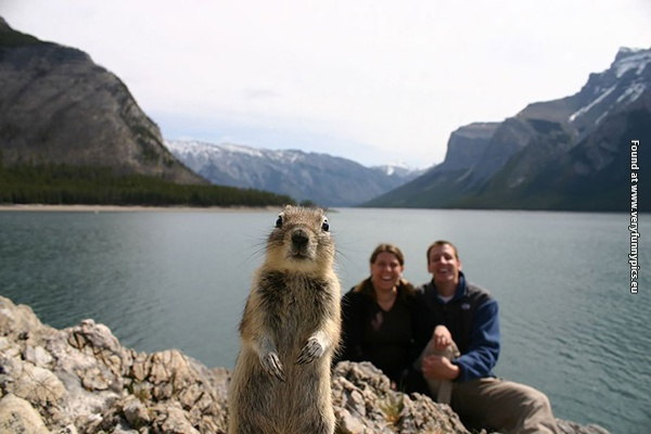 Awesome photobombs by animals (32 pictures)