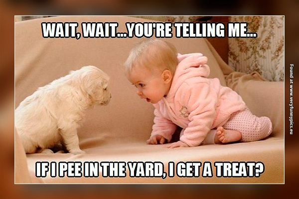 Why dogs pee in the yard