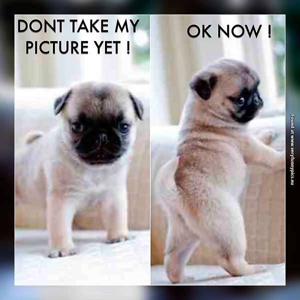 Every girl in front of a camera | Very Funny Pics