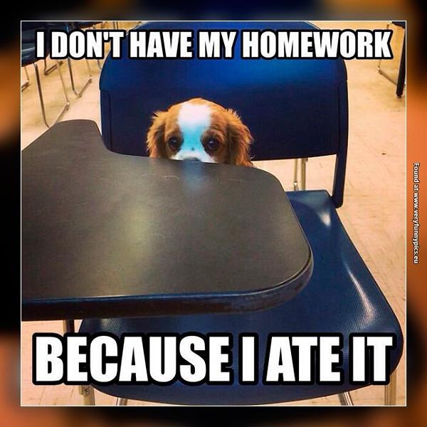 Dog problem in school