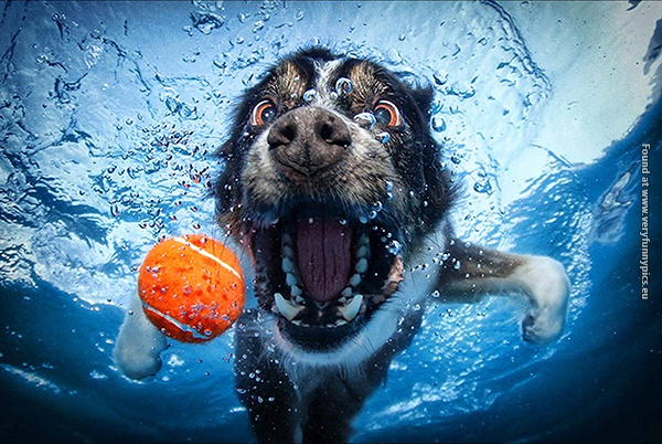 Underwater pictures of dogs chasing balls (16 pictures)