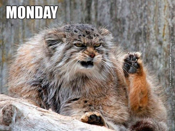 Weekday emotions explained with cats (7 pictures)