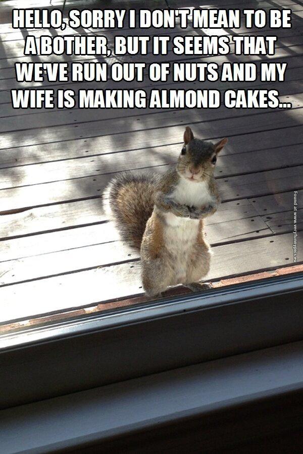 Squirrels have no shame