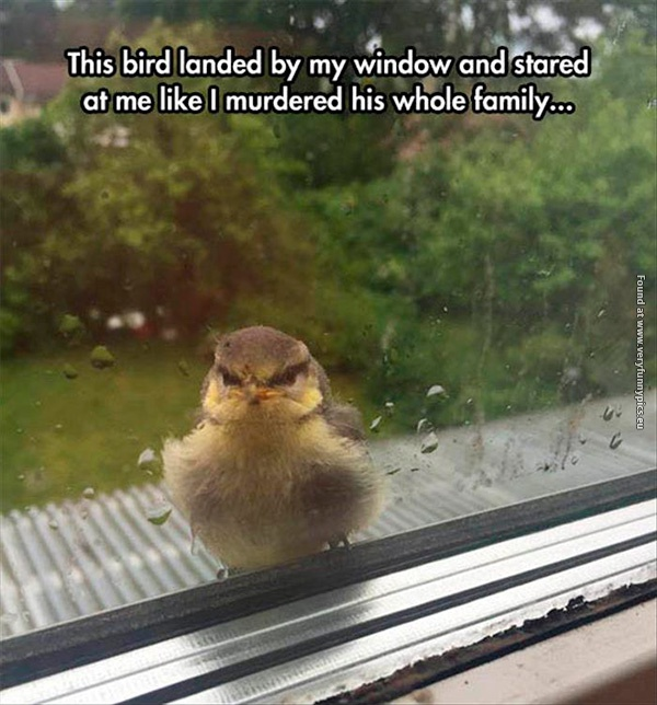 Probably the angriest bird you'll see today