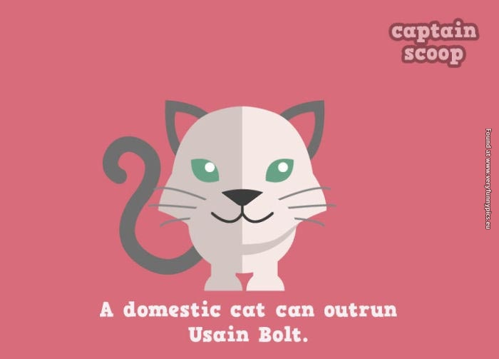 Awesome animal facts with cute illustrations (10 pictures)