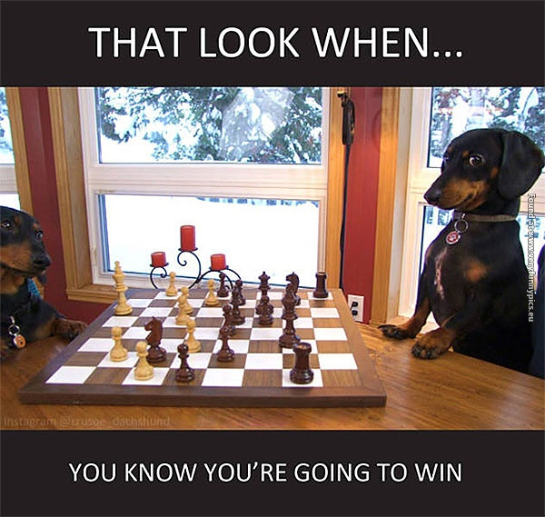 When your dog beats you in chess