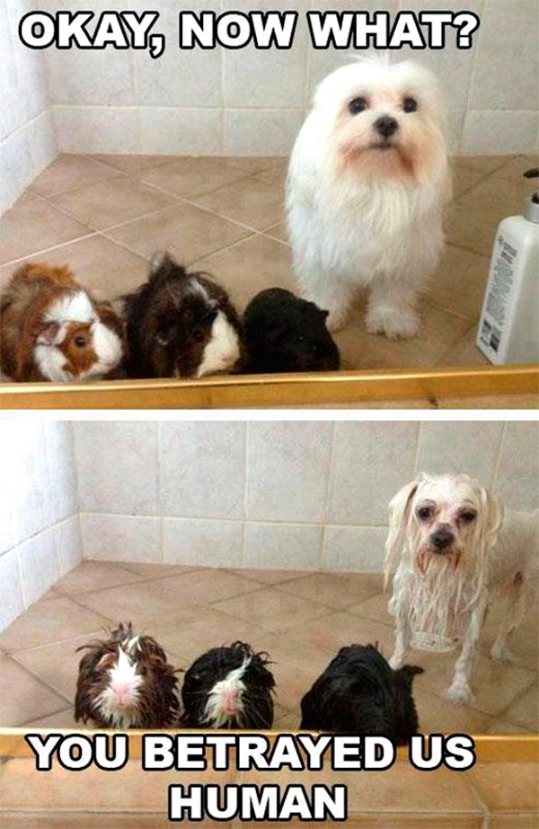 funny-pictures-betrayed-dog-and-friends