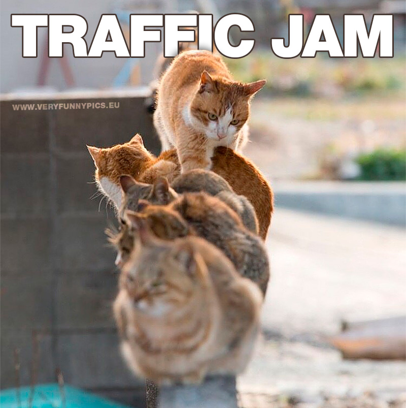 funny-pictures-traffic-jam-cats