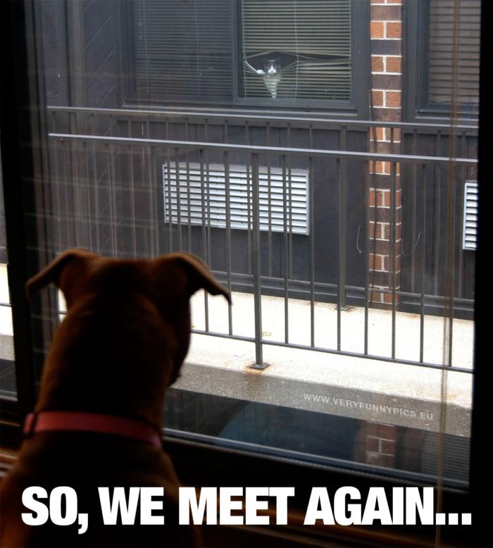 Neighbourly love between species