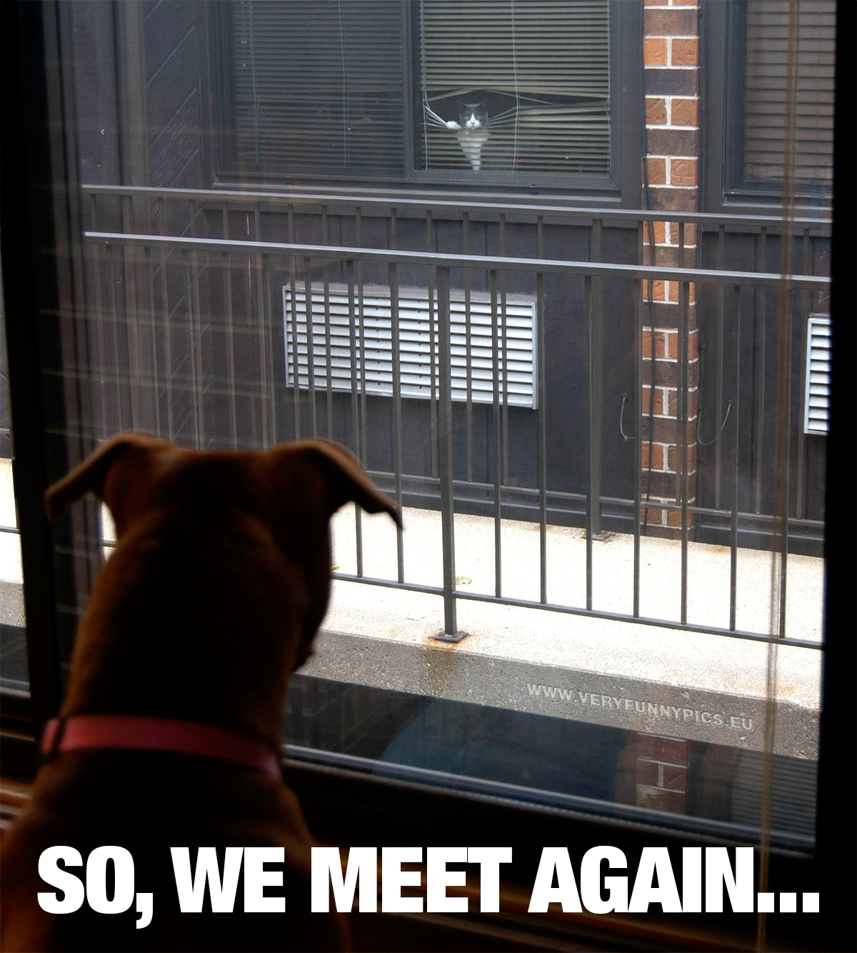 funny-pictures-we-meet-again