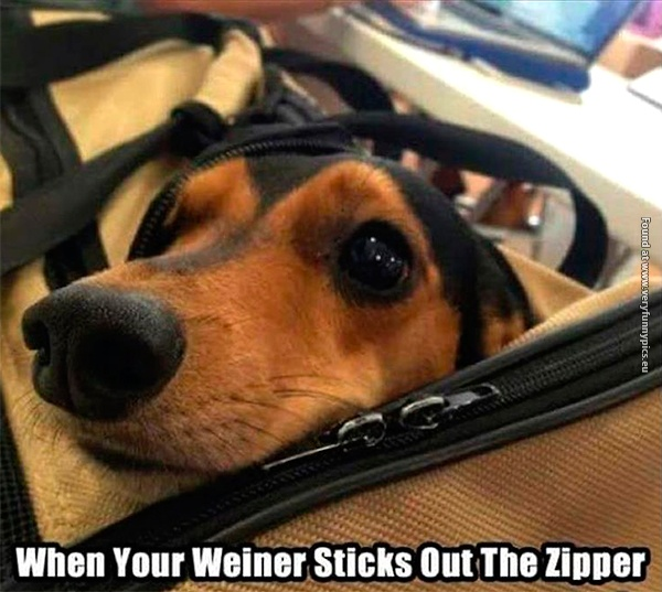 I will never get tired of wiener jokes!