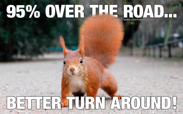 Squirrel logic in trafic…