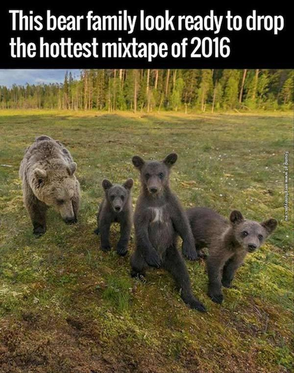Gangsta bears