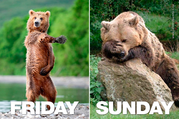 Friday VS Sunday explained with a bear