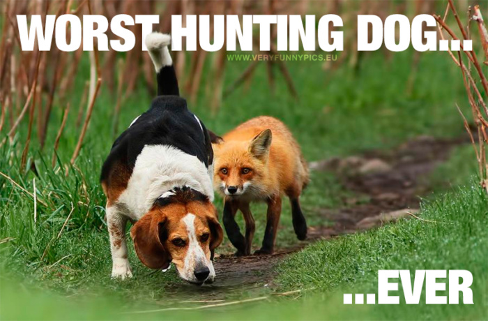 The worst hunting dog in the world