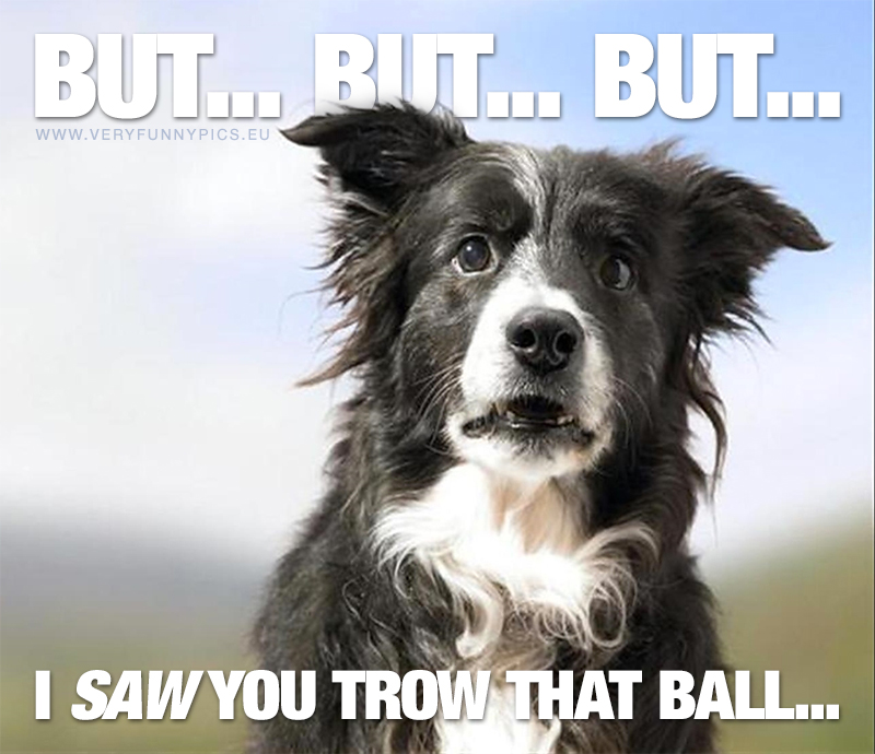 The dog SAW you throw that ball