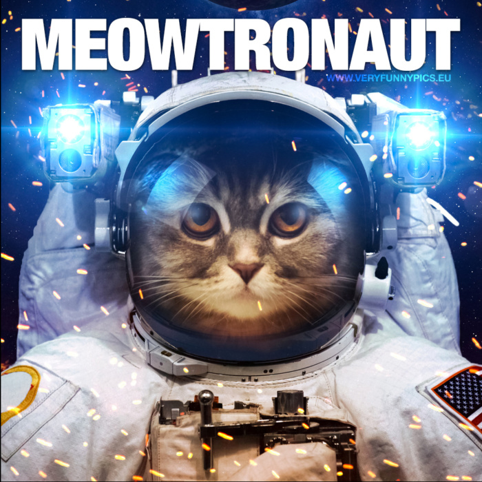 There is really only word that can describe a cat in a spacesuit
