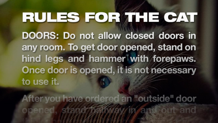 Thirteen rules for cats that are often enforced to the letter