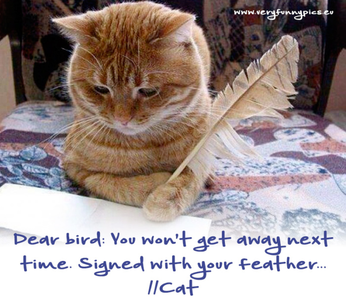 The day when the cat almost caught the bird