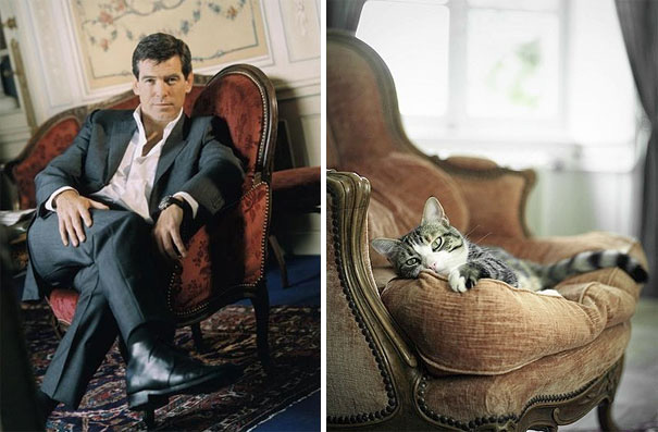funny pictures male models and cat lookalikes 12