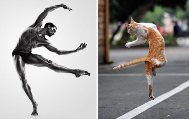 funny pictures male models and cat lookalikes 25
