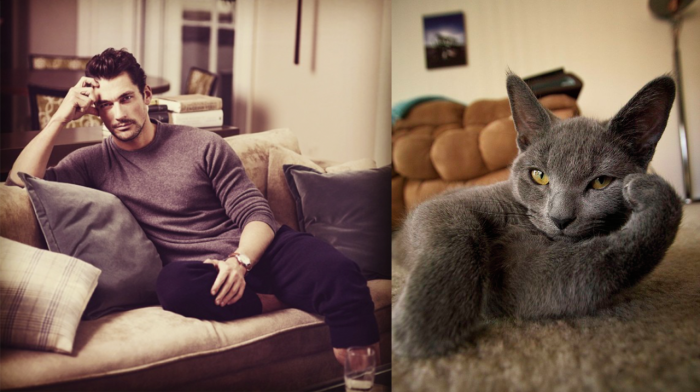 funny pictures male models and cat lookalikes 27