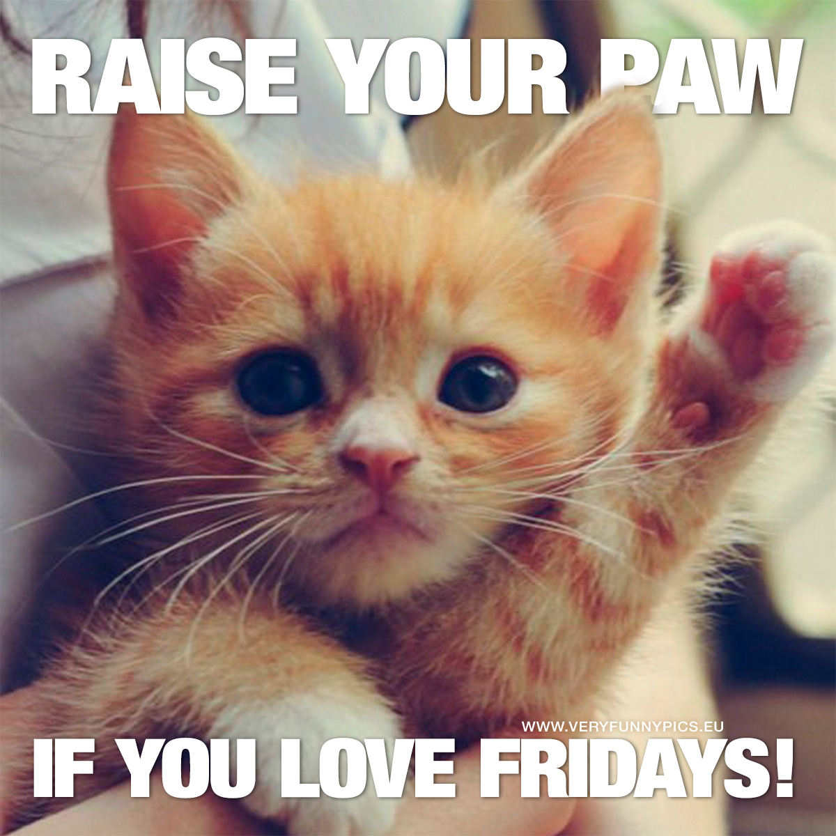 Cat holding up paw - Raise your paw if you love fridays!