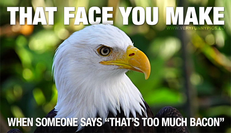 """Sceptical Eagle - That face you make when someon says """"That's too much bacon """""""