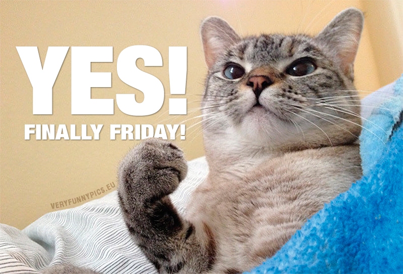 Success cat - Yes! Finally friday!