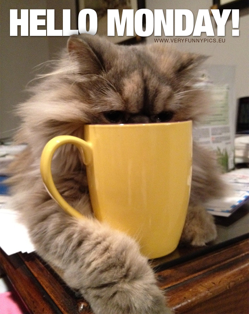 Cat drinking coffee from cup/mug - Hello monday!