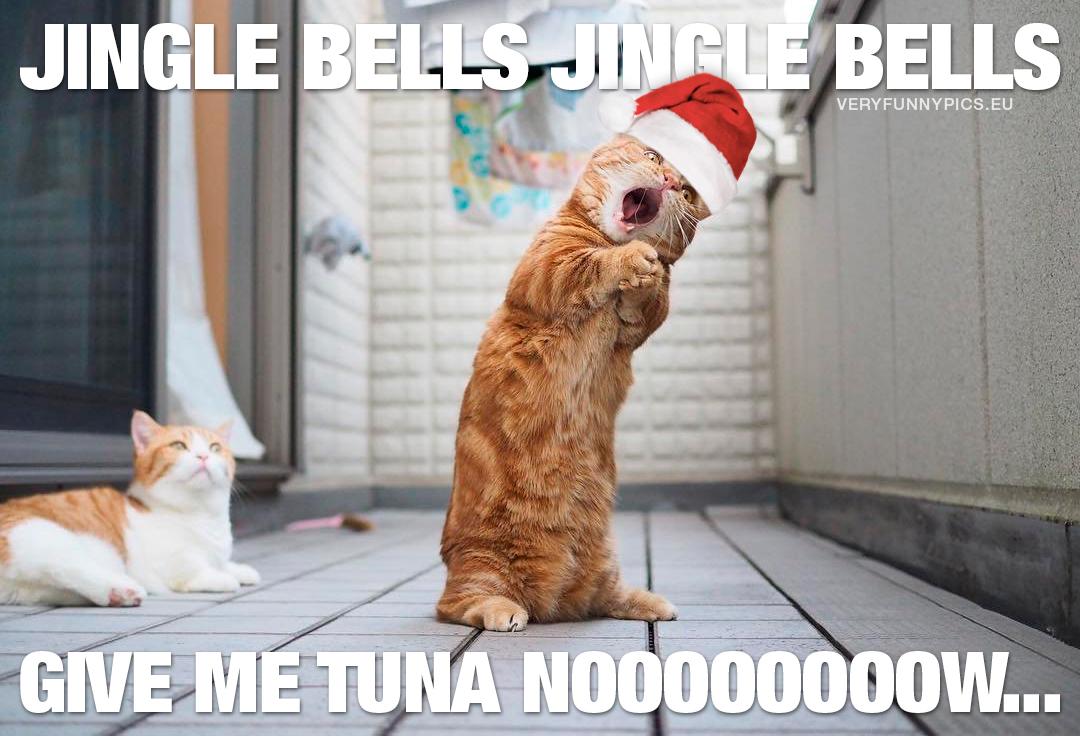 https://veryfunnypics.eu/wp-content/uploads/2016/12/funny-pictures-cat-sings-jingle-bells.jpg