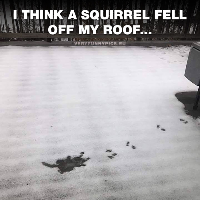 That unmistakable sign of when a squirrel has fallen from the roof
