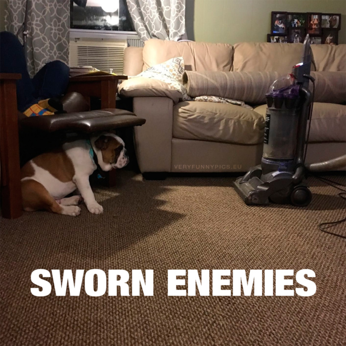 The dog and the vacuum cleaner