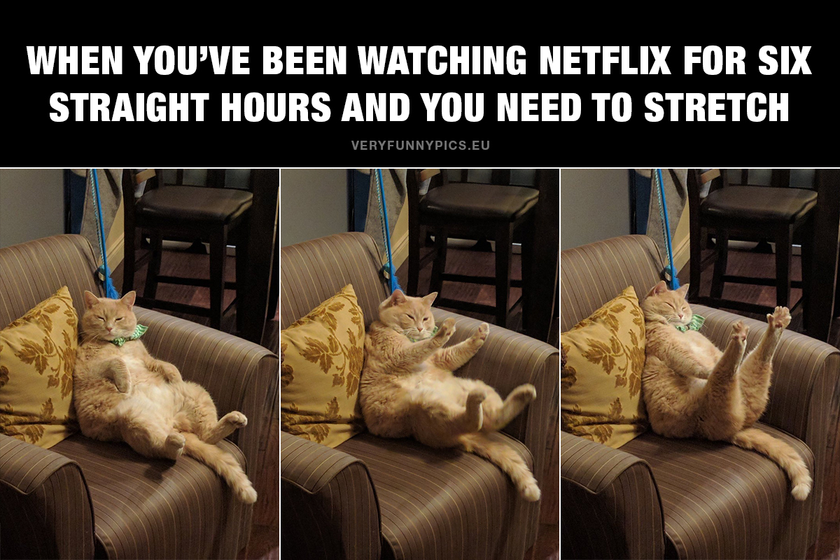 Cat in couch - When You've been watching Netflix for six straight hours and you need to stretch