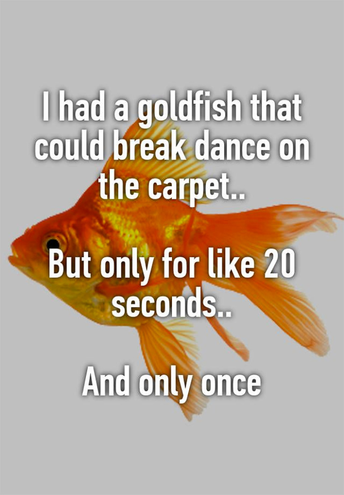 I had an amazing goldfish once
