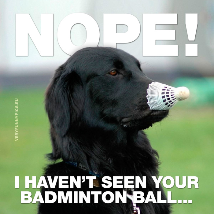 Some dogs just want to keep the ball