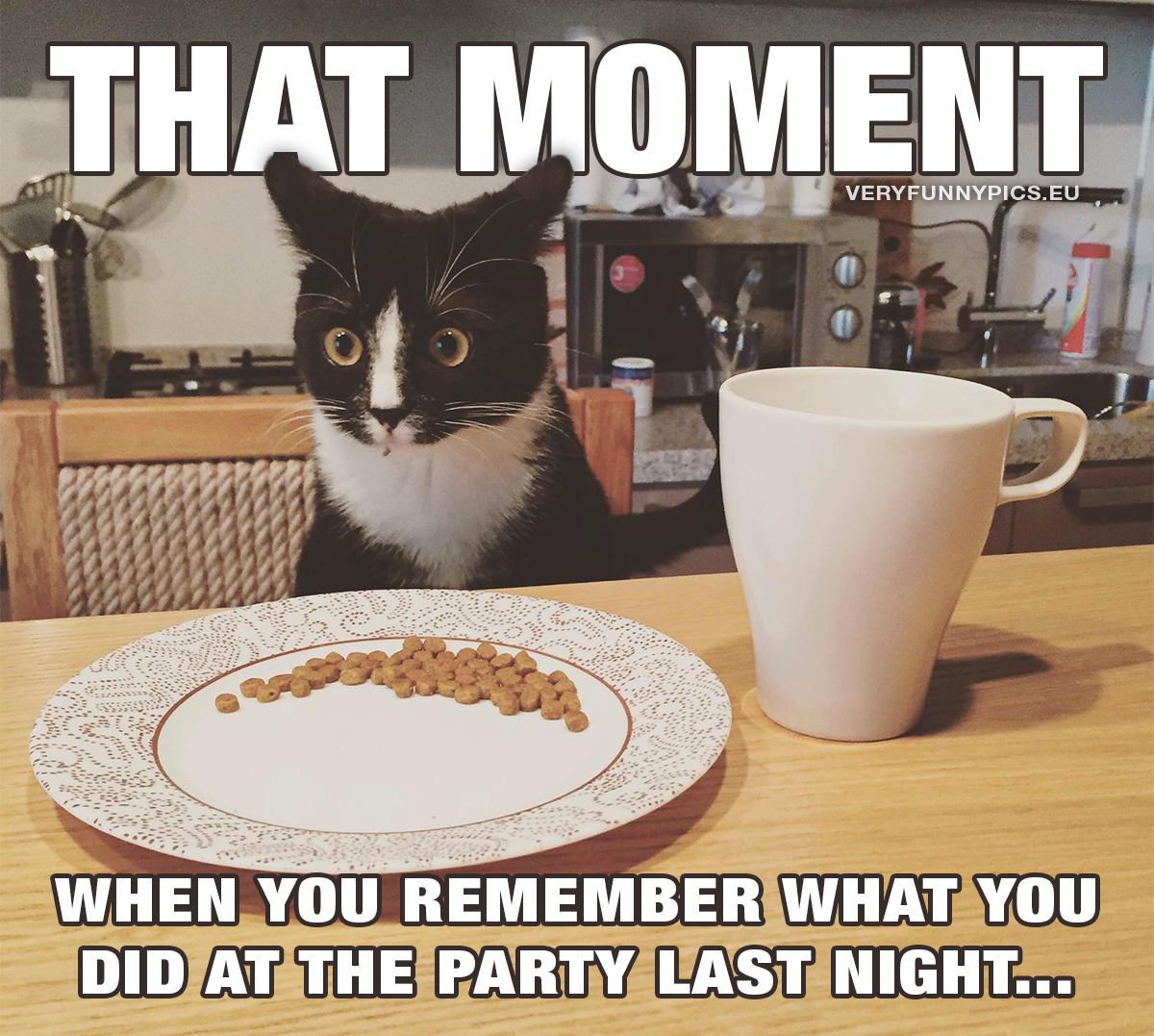 Cat at breakfast table - That moment when you remember what you did at the party last night