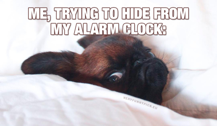 That annoying sound in the morning