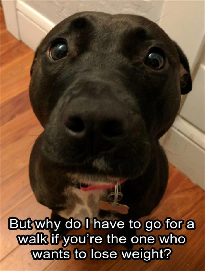 This dog's asking the right question