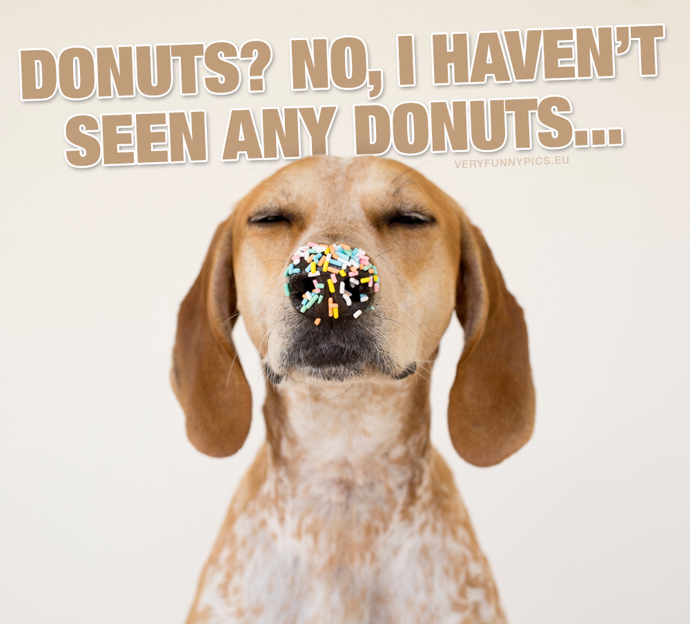 Dog with sprinkles on nose - Donuts? No, i haven't seen any donuts...